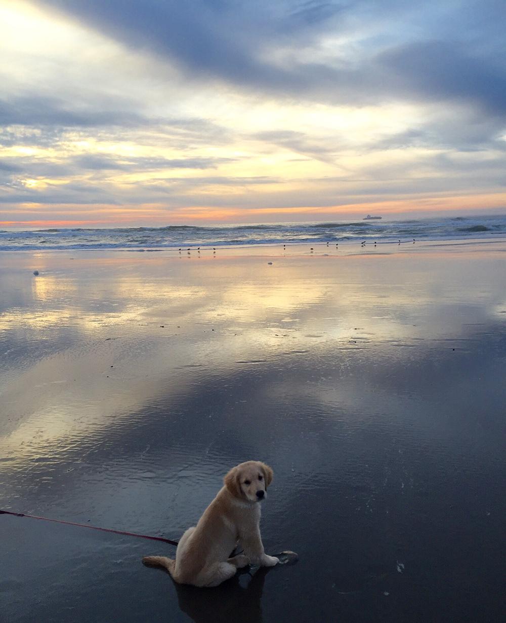 Golden Gate Park Dog Rules