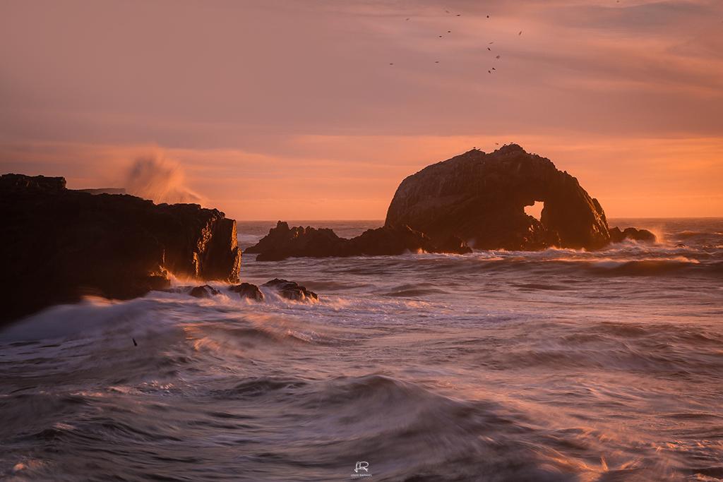 Seal Rocks. Photo by Louis Raphael.