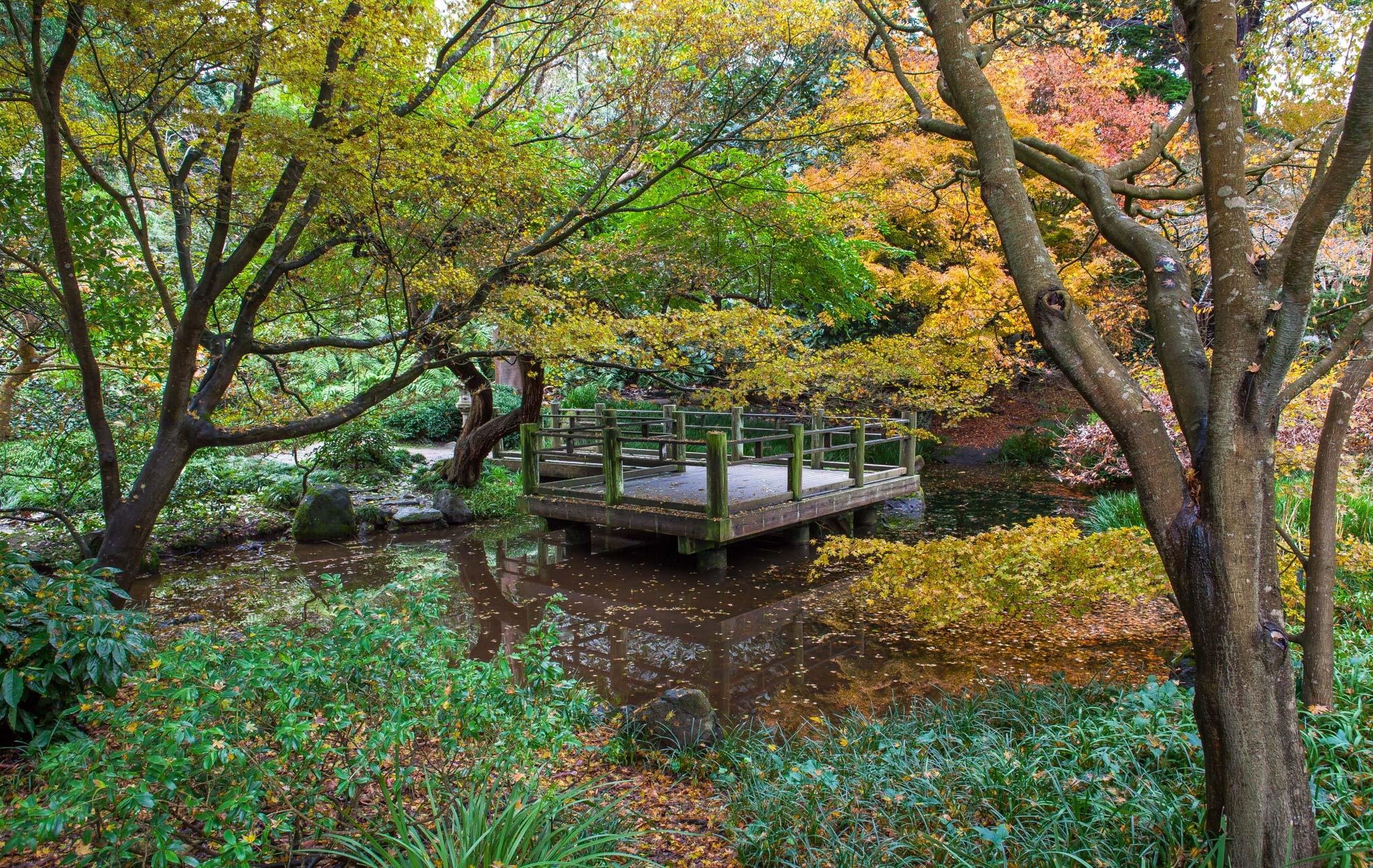 Who says San Francisco has no seasons? Don\'t miss the fall beauty at ...